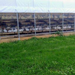 Wanabea Farm LLC